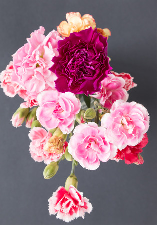Top view of colorful carnation flowers on black background.