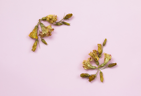 Top view of dried  flowers on pink background Stock Photo