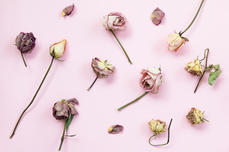 Top view of dried rose on pink background