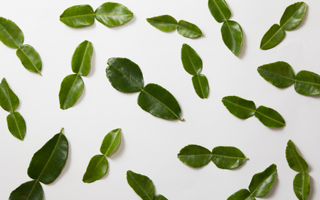Kaffir lime leaves on white background Stock Photo