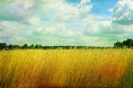 Rural Meadow on a summer day  - vintage card Stock Photo - 9881203