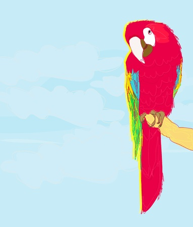 Colourful parrot bird sitting on the perch  Vector
