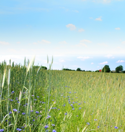 classic countryside landscape Stock Photo - 14416966