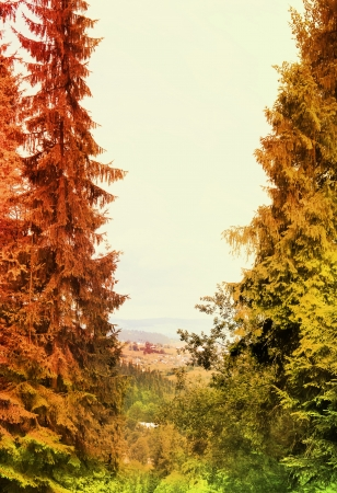 autumn landscape with colorful forest Stock Photo - 15558731