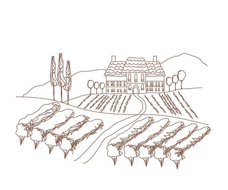 illustration of vineyard  Stock Vector - 16854049