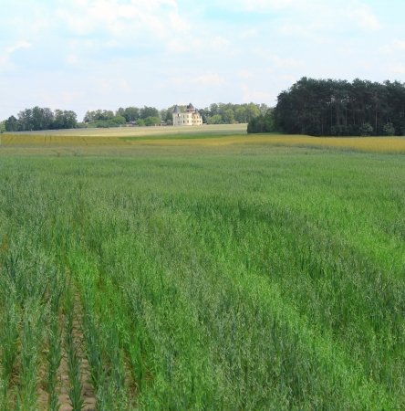 Agricultural field with a house in the background Stock Photo - 17224865