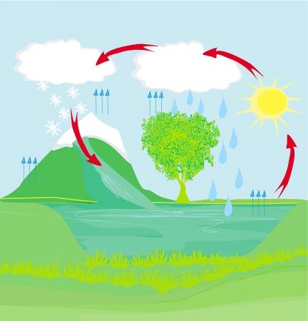 ciclo del agua: ciclo del agua en el entorno de la naturaleza