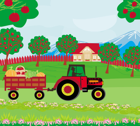tractor in field: landscape with apple trees and man driving a tractor with a trailer full of vegetables