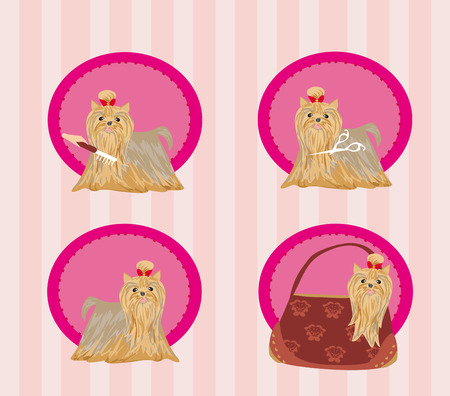 yorkshire terrier: Yorkshire terrier red and black with elegant exhibition haircut - set Illustration
