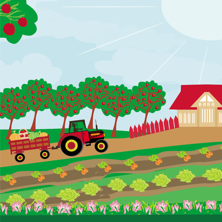 orchard: rural landscape -  tractor and orchard  Illustration