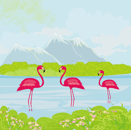 three pink flamingos in the water  Vector