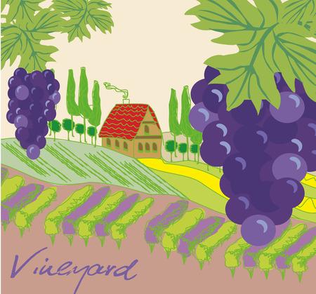 tuscany vineyard: Vector illustration of vineyard Illustration