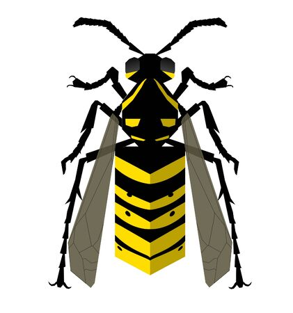Wasp back view vector isolated illustration