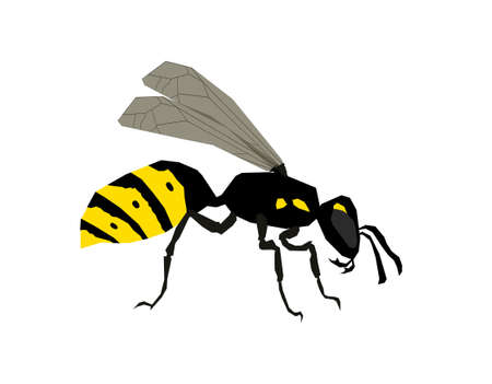 Wasp side view vector isolated illustration