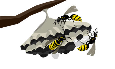 Wasps on the nest vector isolated illustration