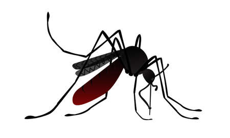 Isolated image of cartoon mosquito. Side view