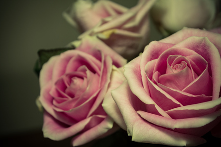 romantic: Romantic Roses Stock Photo