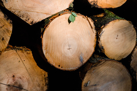 stacked: Stacked tree trunks