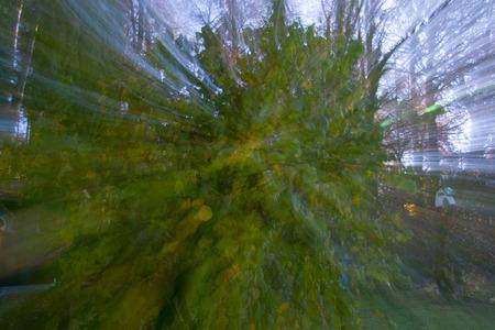hazelnut tree: Abstract Corkscrew Hazelnut tree Stock Photo