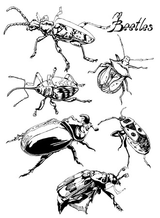 beetles: Beetles of various shapes and sizes with furry paws and fancy hats