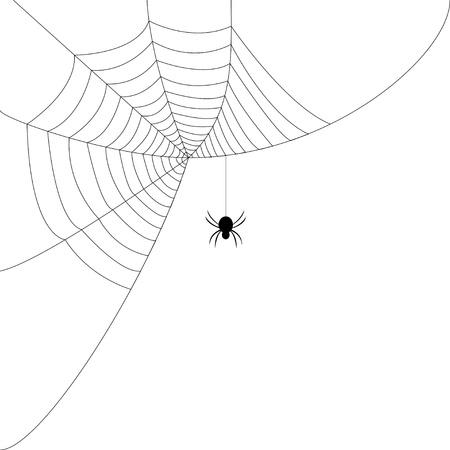 gruselig: Spinnennetz