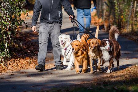 Honden lopen baan