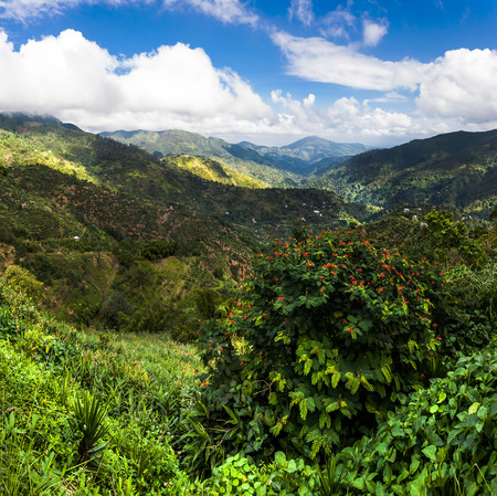 Blue mountains of Jamaica 스톡 콘텐츠