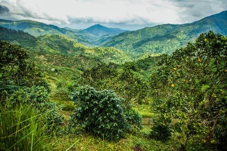 Blue mountains of Jamaica Standard-Bild