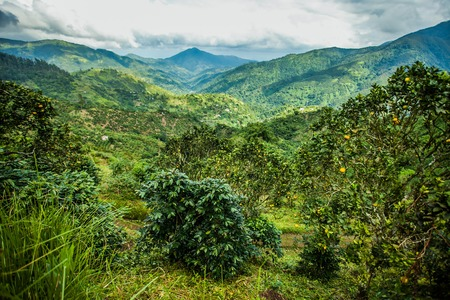 Blue mountains of Jamaica Stock Photo