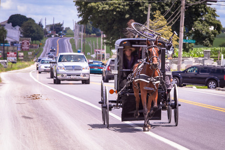 Amish transport horses in USA