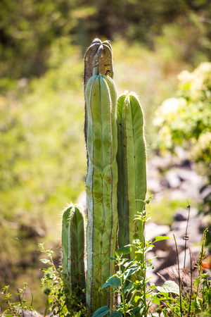 Dry Desert at daylight with cactuses insummer