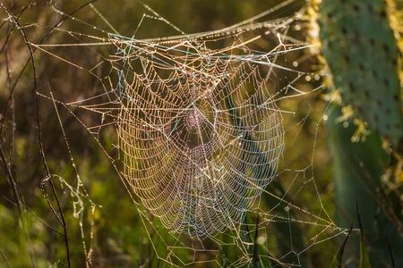 クモの巣は前にクモとクローズアップ
