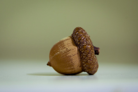 Isolated solo acorn of an oak on white surface