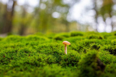 Forest mushrooms close up at day isolated Stock fotó