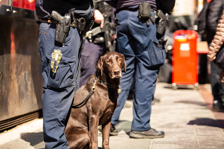 K9 Police dog together with officer on duty at day