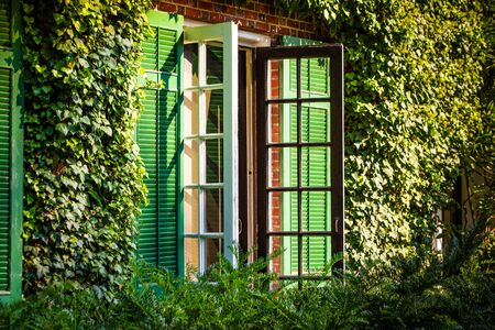 Wall Ivy decoration around window summer sunlight day