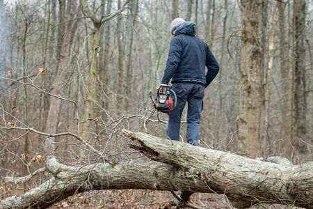Lumberjack using a Gas-Powered Chain Saw cutting trees Stock Photo