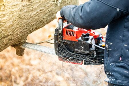 Lumberjack using a Gas-Powered Chain Saw cutting trees close up