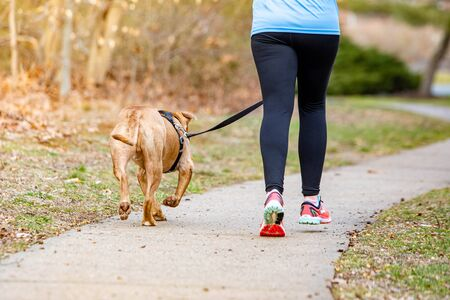 Training exercise with dog on leash running healthy lifestyle at day