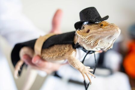 Cute bearded dragon reptile wearing a suit and hat