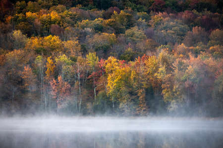 Foggy sunrise at scenic forest late at fall