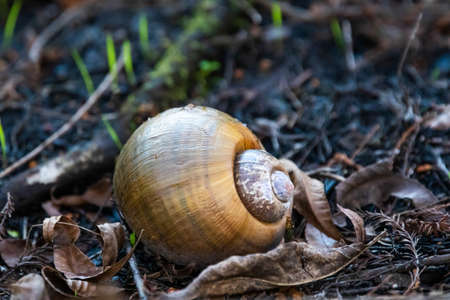 Big yellow snail shell alone in the forest