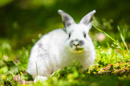 Cute little white bunny rabbit on the grass meadow eating portrait