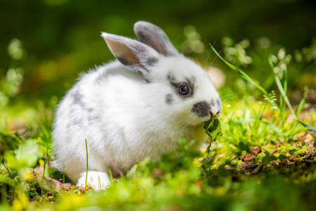 Cute little white bunny rabbit on the grass meadow eating