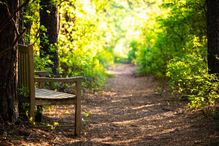 Empty wooden bench at morning sunshine in the forest Banco de Imagens