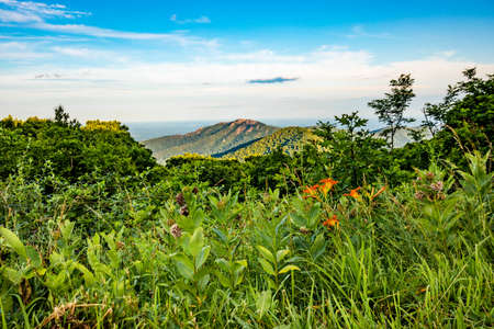 Scenic overlook of Shenandoah blue ridge mountains and hills with flowers at the front during sunset