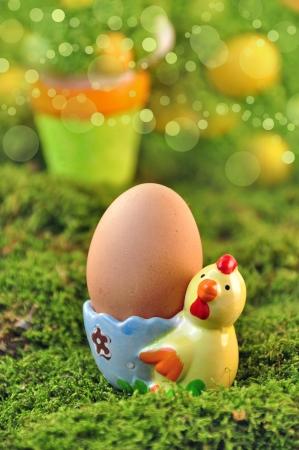 easter - chicken egg in eggcup