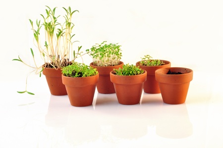 small vases containing seedlings photo
