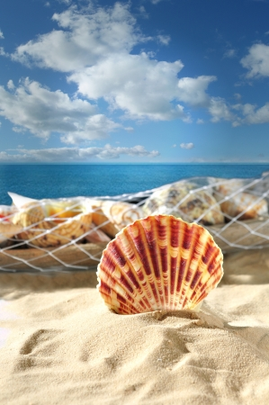 seashell in sand on a sky background
