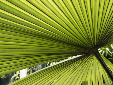 to conceal: palm leaf
